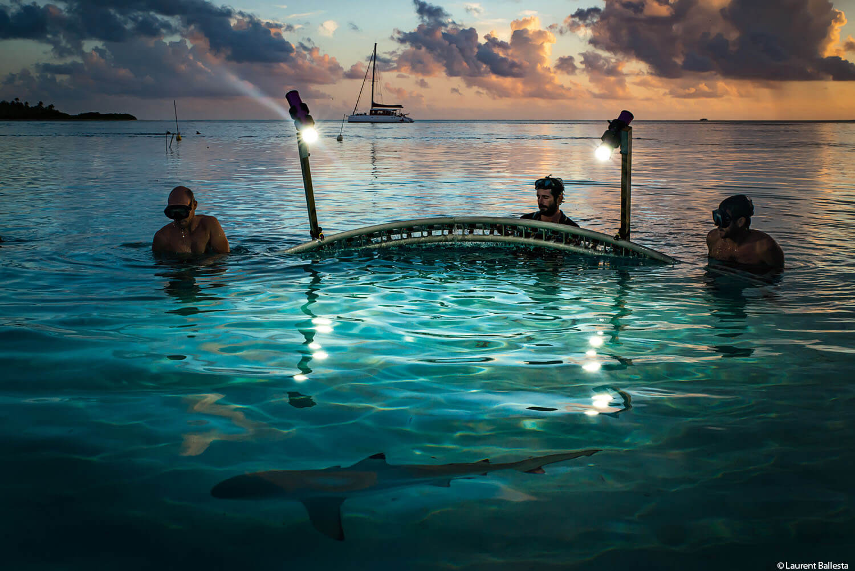 Drei Männer spät abends an der Meeresoberfläche beobachten einen Hai